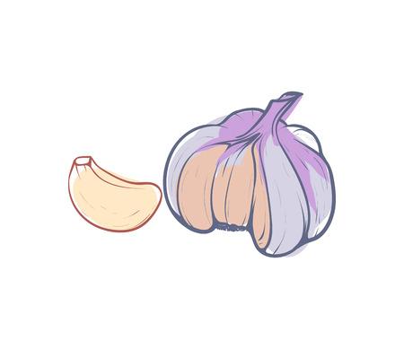 Ripe garlic isolated vector icon
