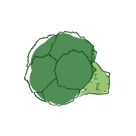 Ripe broccoli isolated vector icon