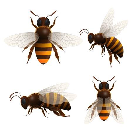 Honey bee isolated icons set