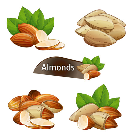 Almond kernel with green leaves set isolated on white background illustration. Organic food ingredient, traditional vegetarian snack. Almond nut seed whole and shelled collection.