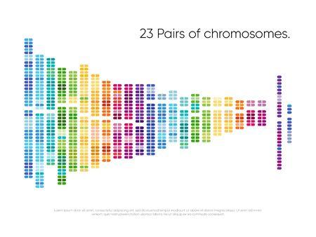 Chromosomes pairs. Structure of DNA genome set Vektorgrafik