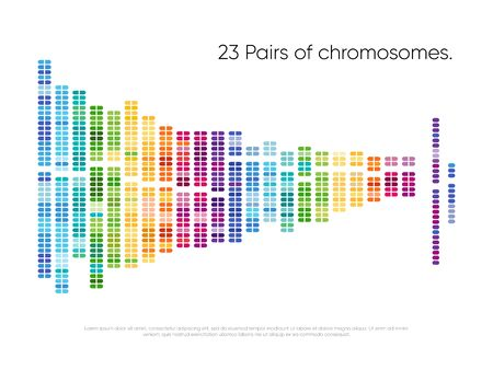 Chromosomes pairs. Structure of DNA genome set
