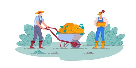 Farmer harvesting pumpkins. Isolated farmer man and woman people cartoon characters with pumpkins harvest in farm wheelbarrow cart and crate harvesting vegetable crops. Vector agriculture, farming