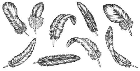 Feather sketch. Isolated vintage bird feather icon collection flat vector illustration. Black hand drawn sketches decoration on white background