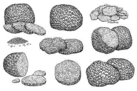 Hand drawn truffle sketch set isolated on white