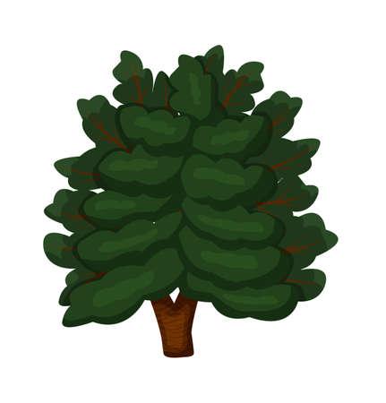 Green oak deciduous tree isolated on white background