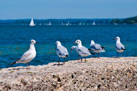Gulls on the Beach, on a Background of Sea Water and White Sails photo