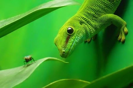chameleon lizard: green gecko lizard on the vertikal green wall surrounded by plants Stock Photo