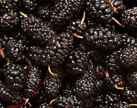 mulberry fruit as background photo
