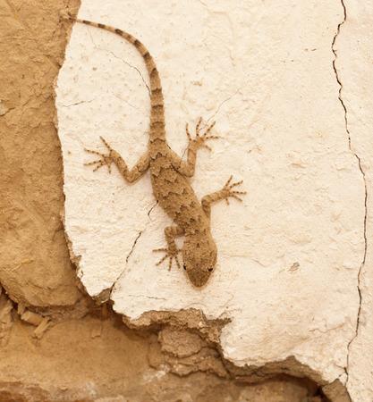 Lizard on the wall Фото со стока - 32309839