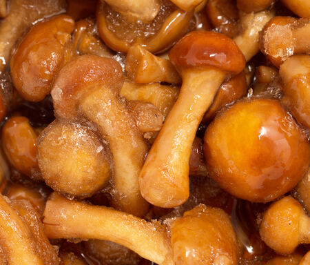 mucus: masljata as background macro