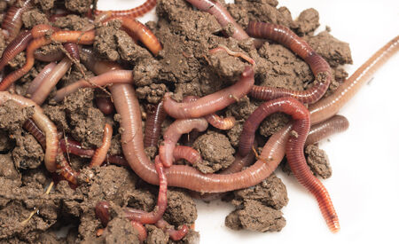 wiggler: a bunch of worms to the earth on a white background