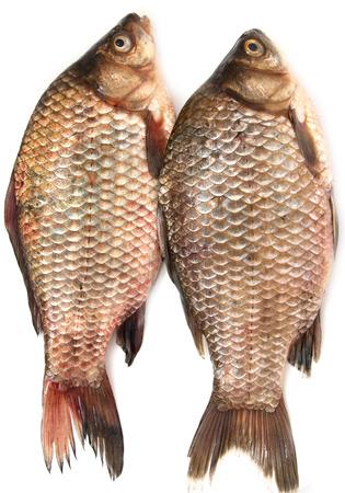 karausche: zwei Fische, Karau