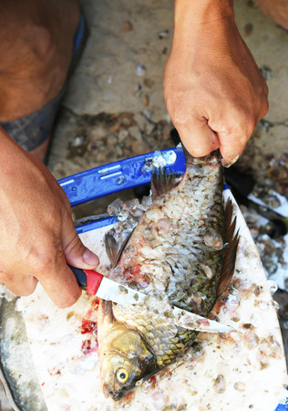 scardinius: hands clean fish