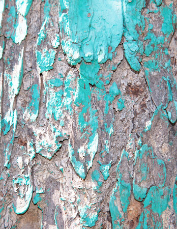 splintered: wooden fence with old paint