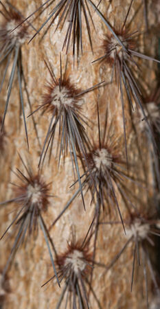 barrel cactus with spines photo