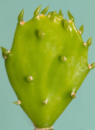 appendix: young appendage cactus