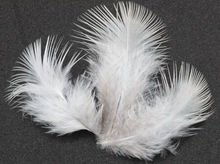 feathers on a black background Stock Photo