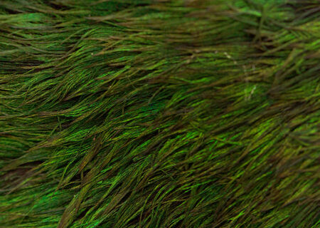green tone: feathers in green tone