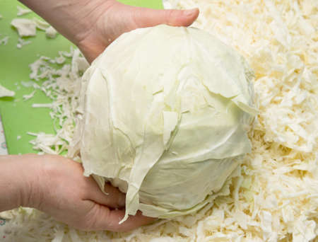 gastronome: head of cabbage in the hands of