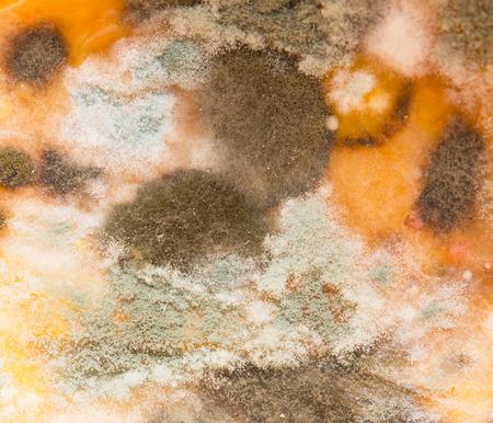 spoilage: mildew on pumpkin Stock Photo