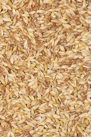 malted: wheat as background Stock Photo