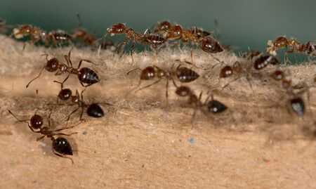 brown box: ants on the brown box Stock Photo