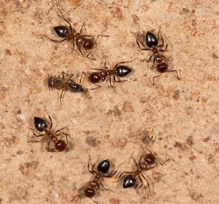 ants on a brown wall Stock Photo