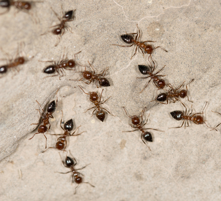 pismire: ants on the wall