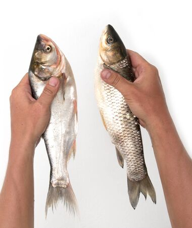 pisciculture: fish in hand