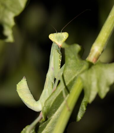insect on leaf: insect on leaf