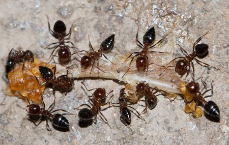 antrey: ants eat
