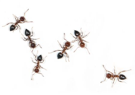 ants on a white background 写真素材