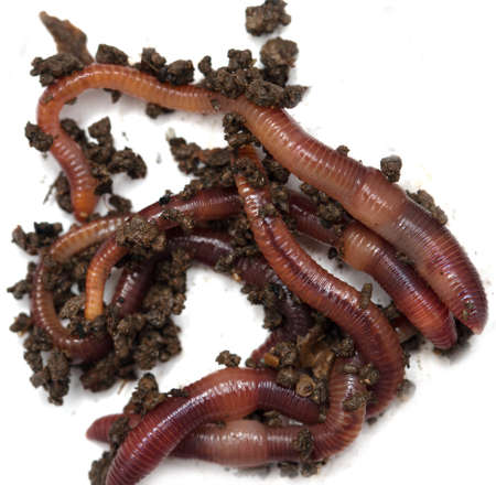 worms: Worms on a white background