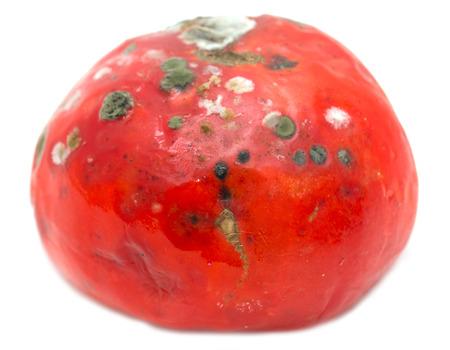 fungal disease: mold on tomato Stock Photo