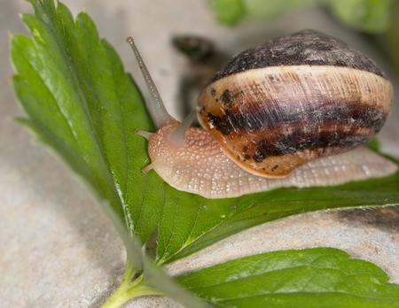 slug: Slug en una hoja