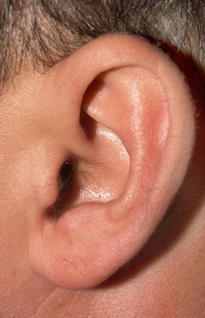 listen ear: male ear Stock Photo