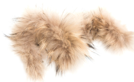 anti season: a piece of brown fur on a white background Stock Photo