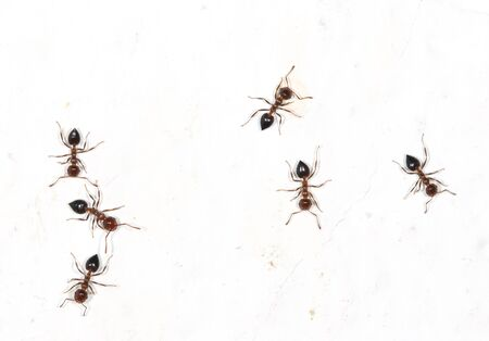 ants: ants on a white wall with spots Stock Photo
