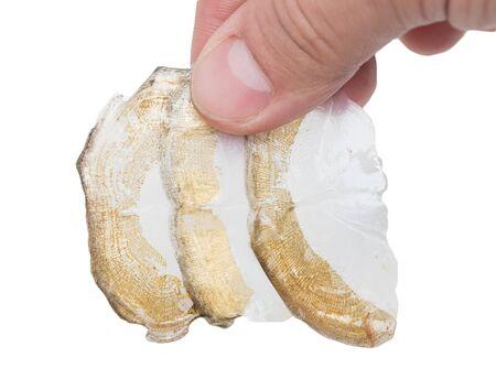 mirror carp: Scale mirror carp on a white background