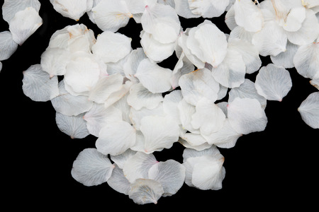redolence: White petals of flowers on a black background