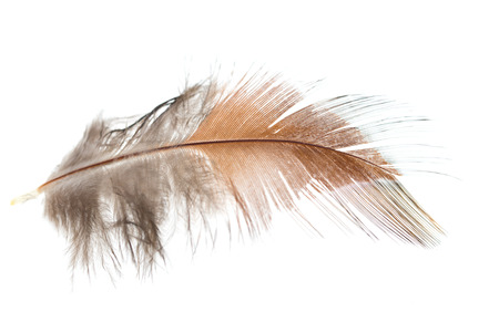 brown feather on white background