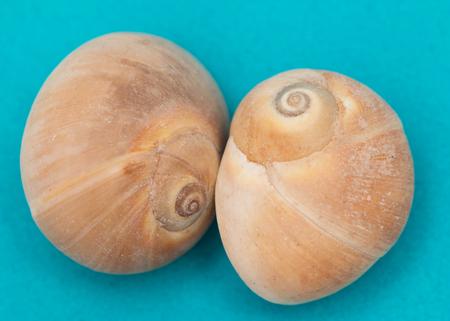 seashells on a blue background