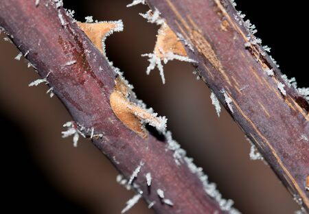 frost on the branch Stock Photo