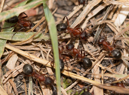 ants in the grass
