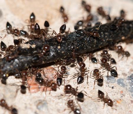 ants eating Stock Photo