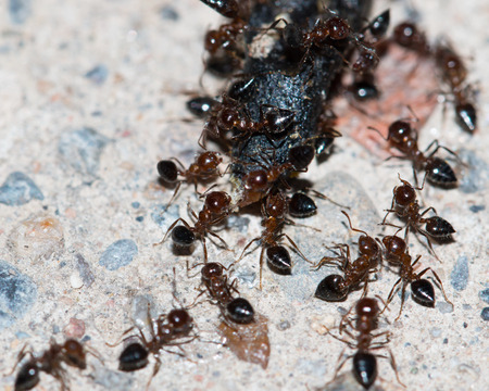 ants eating Stock Photo