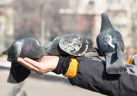 Pigeons on the hand