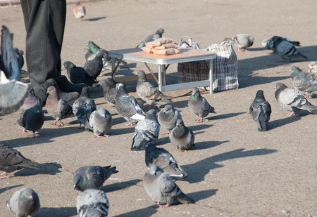 scavenging: Pigeons on the pavement