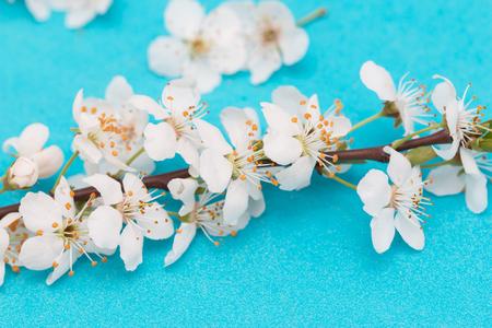 fiori bianchi su sfondo blu Archivio Fotografico